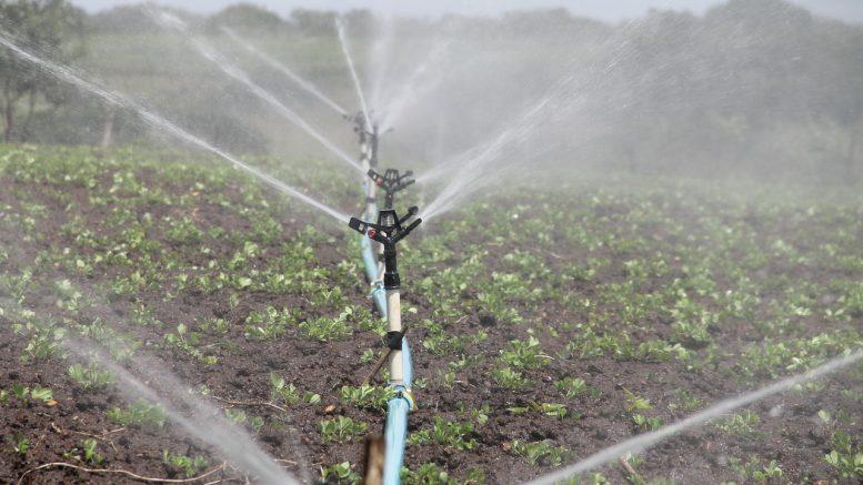 Rasen Bewässerungssystem automatisierte bewässerung für den rasen baumagazin rund ums