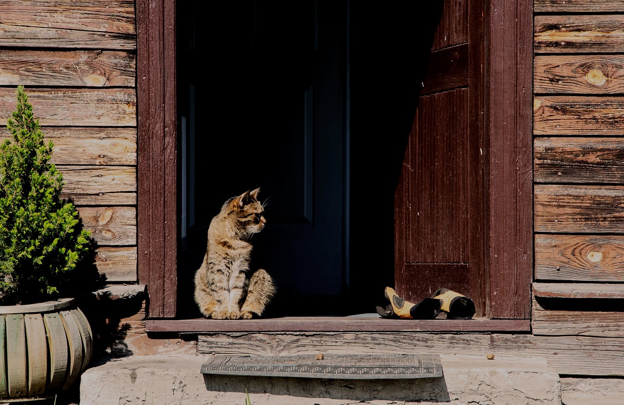 Katzenklappe selber einbauen
